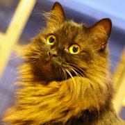 ネコ好き 布スキ