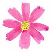 日立市の女性起業家サークル「花は18」