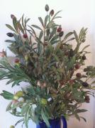 oliveのおべんとダイアリー