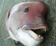 魚心の釣り日誌