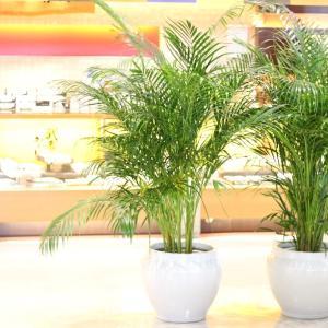 熊本大津の観葉植物の販売とレンタルのお店「花いちば」