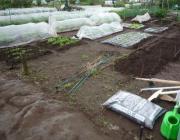 もっちゃんの8割家庭菜園
