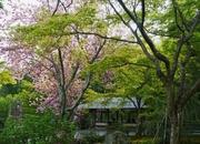 散策日記 主に京都  四季の彩り雅やかに