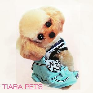 TIARA pets 子犬入園情報ブログ
