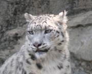"""私の""""Big Cat PHOTO Diary"""""""