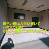 黄槿写真フィルム