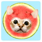 猫がクンクン匂いをかぐブログ(874ニキ)