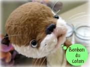 ♪ Bonbon du coton ♪