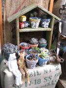 さとちん家の雑貨と植物のキラキラ毎日☆