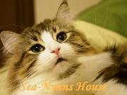 〜Cat walk〜海猫さん家の日常+