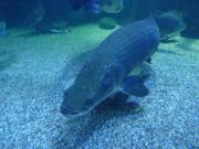 大型魚飼育 in 神秘の国インドネシア
