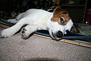 愛犬 キャプテンジャックの航海日誌