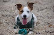 吉兵衛窯看板犬夏子のブログ
