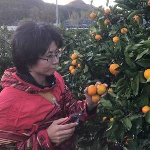 農家の嫁 修行日記@和歌山