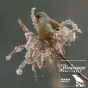 Birdscape〜野鳥のいる風景〜