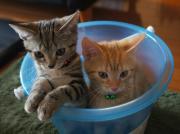 気まぐれ猫ご飯