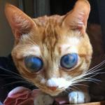 僕コロナ。目は見えないけど元気だよ!