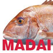 MADAI Kingさんのプロフィール