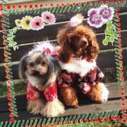 愛犬工房CHIPTAN 犬服屋さんブログ