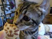 猫手伝いのブログ