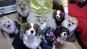 7人の犬侍と心臓病持ちのママの日記