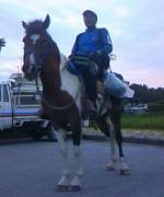 庭で馬を飼うサラリーマン