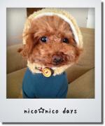 nico☆nico days