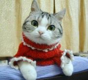 猫と一緒に暮らしましょう