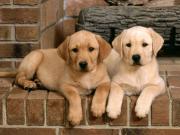 犬と一緒に暮らしましょう!