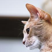 浜松初!猫がいるカフェAdagioのブログ