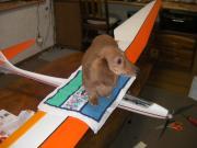 サーマルに乗ったかなー!RCグライダー