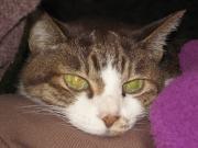 猫と小学生のブログ