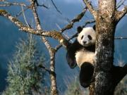 パンダ熊猫大好き日記