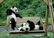 パンダがとても可愛い。。