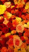 Masyu草月いけばな教室・Fragrance of Flower