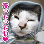 キャバレー「猫〜JEALOUSY」