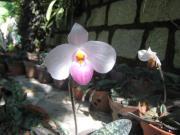 ベトナムDALATの花と緑