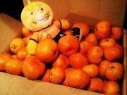 OrangeMonster