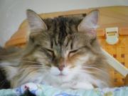 南極猫のブログ