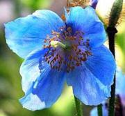 花と木の育て方│元気に生長させる栽培のコツ!