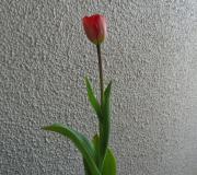 にゃん子さんのブログ