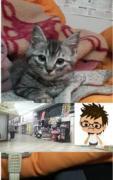 SHOBUKUROYAの猫とジイィのブログ