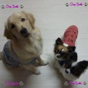 DogSmile-Life
