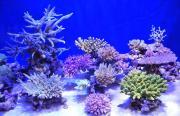 小型ヤッコとサンゴ礁