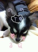 ♥ルナ&ののちゃん♥犬と猫のホッコリ日記・・・2