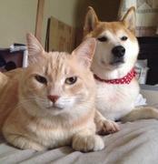 モジーノ家のねこ連と犬