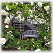 マツモト家の庭