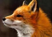 FOX HAIR at Christchurch