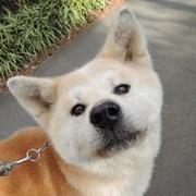 GO!保護犬GOさんのプロフィール