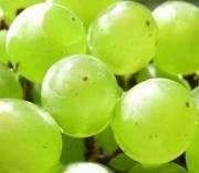 初心者の果樹栽培|庭植え鉢植えで大収穫